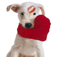 Valentine - Dog