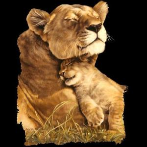 Contented Lions